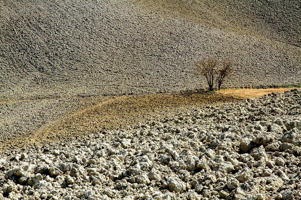 Tra le crete e il grano
