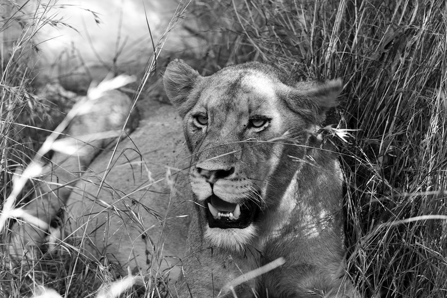 Wild Africa // Great Kruger Park, South Africa